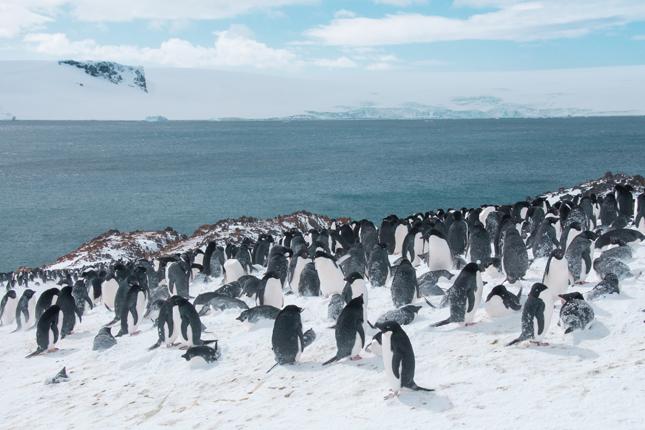 2 Antarktyka